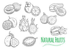 Exotic tropical fruits  sketch icons Royalty Free Stock Photography