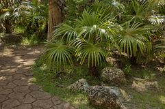 Exotic tropical garden with palm in Sun City Stock Photo