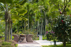 Tropical forest garden. Exotic tropical garden, tourist resort Royalty Free Stock Photography