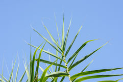 Exotic tropical green leaf against blue sky. Nature background Stock Images