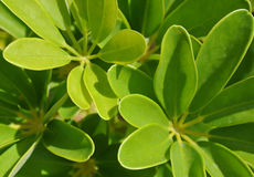 Exotic tropical green leaf plant Stock Photo