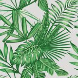 Exotic tropical leaves seamless pattern Royalty Free Stock Images