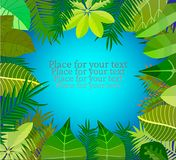 Exotic tropical jungle floral frame. With palm tree, monstera leaves and place for text Stock Photos