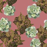Exotic tropical jungle plants. Seamless vector tropical pattern with tropical plants with pink spots and succulents. Dark pink background vector illustration