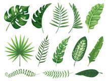 Exotic tropical leaves. Monstera plant leaf, banana plants and green tropics palm leaves isolated vector illustration