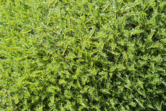 Exotic tropical moss background Stock Photos