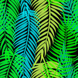 Exotic tropical palm leaves. Seamless abstract vector pattern. Royalty Free Stock Photography