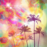 Exotic tropical palm trees  with fantasy sunset background . Hig Royalty Free Stock Images