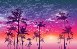 Exotic tropical palm trees  at sunset or moonlight, with cloudy Stock Images
