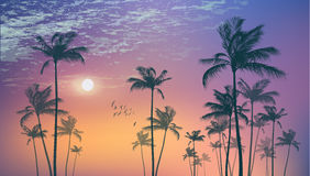 Exotic tropical palm trees  at sunset or moonlight, with cloudy Royalty Free Stock Photo