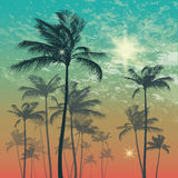 Exotic tropical palm trees at sunset or sunrise. Vector illustration. Silhouette of palm tree and sunset sky Stock Photos