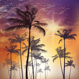 Exotic tropical palm trees at sunset. Vector illustration Royalty Free Stock Photography