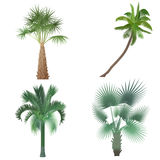 Exotic tropical realistic palm tree collection set. Stock Images
