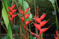 Exotic tropical vegetation. With beautiful red flowers Royalty Free Stock Images