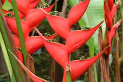 Exotic tropical vegetation. With beautiful red flowers Stock Images