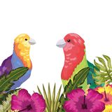 Exotic and tropicas vector illustration