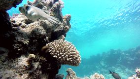 Exotic, Underwater, The corals and fish. stock video