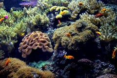 Exotic underwater sea life Stock Photo