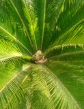 Palm tree in summertime royalty free stock images