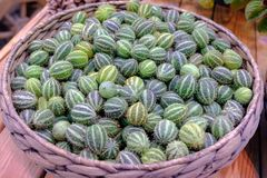 Exotic vegetables anguria in wicker basket royalty free stock image