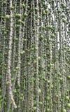 Exotic vegetation Royalty Free Stock Image