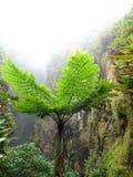 Exotic vegetation Stock Photo