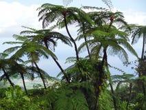 Exotic vegetation Stock Photography
