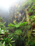 Exotic vegetation Stock Photography