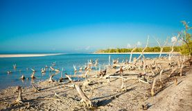 Exotic view of the Gulf of Mexico on the island Stock Image