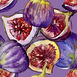 Exotic  violet figs wild fruit in a watercolor style pattern. Exotic  violet figs healthy food in a watercolor style pattern. Full name of the fruit: figs Stock Photo