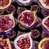 Exotic  violet figs wild fruit in a watercolor style pattern. Exotic  violet figs healthy food in a watercolor style pattern. Full name of the fruit: figs Stock Photography