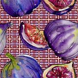 Exotic  violet figs wild fruit in a watercolor style pattern. Exotic  violet figs healthy food in a watercolor style pattern. Full name of the fruit: figs Stock Images