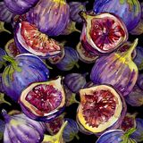 Exotic  violet figs wild fruit in a watercolor style pattern. Exotic  violet figs healthy food in a watercolor style pattern. Full name of the fruit: figs Royalty Free Stock Photo