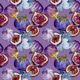 Exotic  violet figs wild fruit in a watercolor style pattern. Exotic  violet figs healthy food in a watercolor style pattern. Full name of the fruit: figs Stock Photos