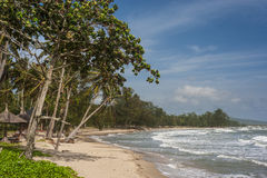 Exotic virgin beach with golden. Virgin beach with trees and rough sea perfect for a holiday Royalty Free Stock Photos