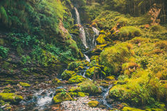 Exotic waterfall in the jungle. An exotic waterfall in the jungle Stock Photo