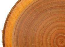 Exotic wood texture Stock Images