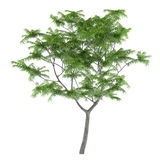 Exotic young tree isolated. Stock Image