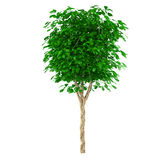 Exotic young tree Royalty Free Stock Images