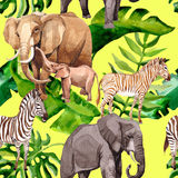 Exotic zebra and elephant wild animals pattern in a watercolor style. Stock Images