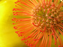Exotica. Close up shot of an exotic flower against a golden background Stock Image