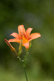 exotics花 库存图片