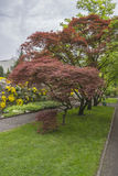 Exotics träd Arkivfoto