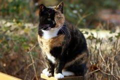 Exotik-Katze im Detail Lizenzfreies Stockfoto