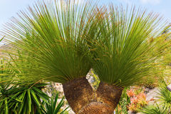 Exotique植物在exotique庭院里在Eze,南法国 免版税图库摄影
