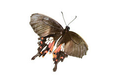 Exotique butterly Photographie stock