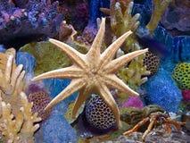 Exotisch aquarium en Zeester Stock Foto's