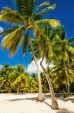 Exotisch Caraïbisch strandhoogtepunt van mooie palmen, Dominicaanse Republiek royalty-vrije stock afbeelding