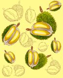 Exotisch durian fruit stock illustratie