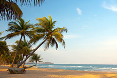 Exotisch, eenzaam strand met palmen en oceaan Stock Afbeelding